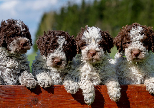 puppy biomarkers science