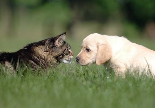puppy and kitten science