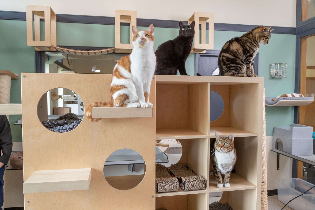 Cats on a shelf unit