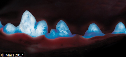A picture of a dog's teeth with the plaque visible