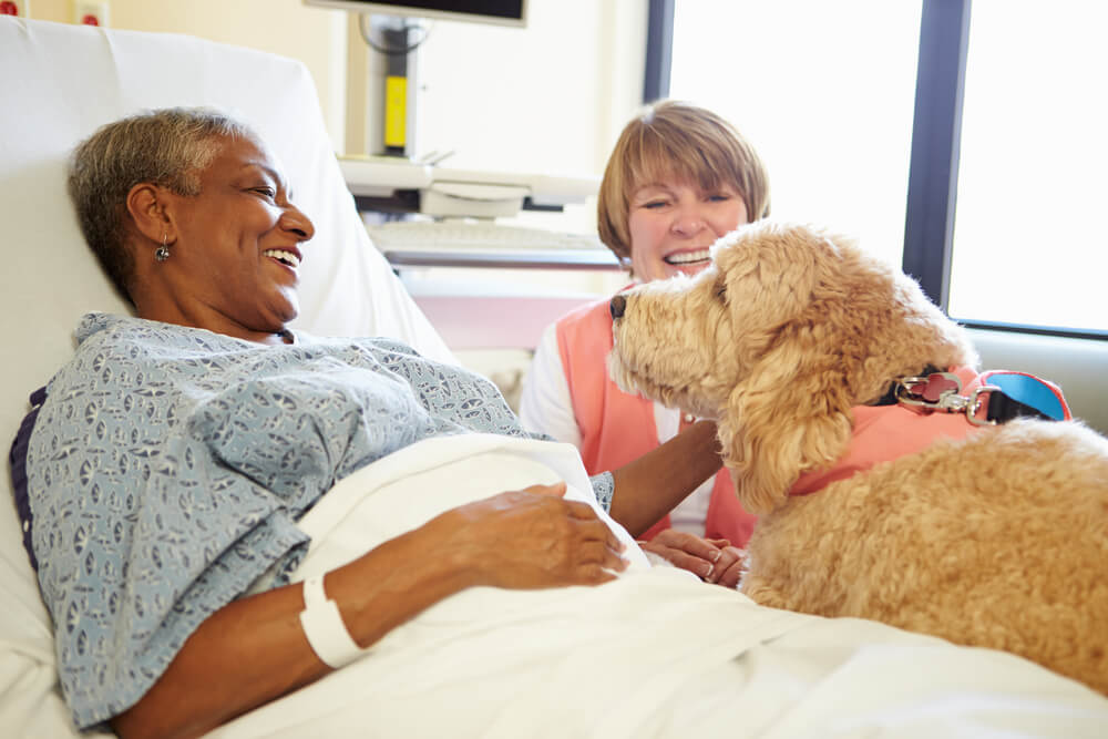 Senior lady being visited by therapy dog in hospital
