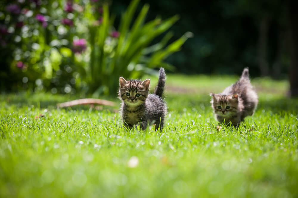 kittens in field