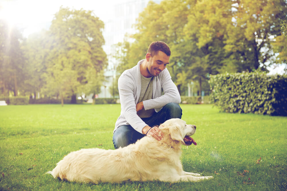 Man petting dog in park