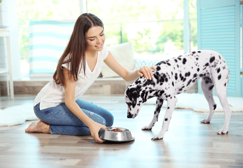 woman feeding dalmatian dog