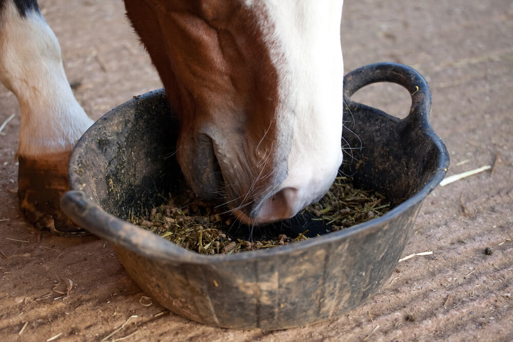 Horse eating from bowl