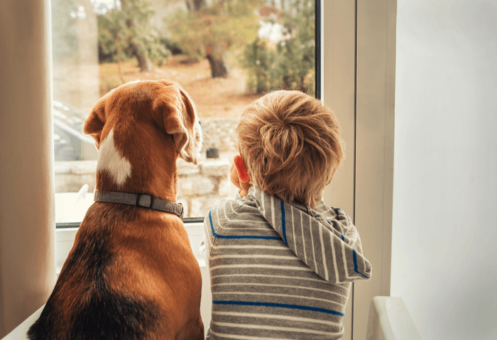 boy and dog looking out the window