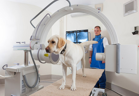 dog standing still for an mri