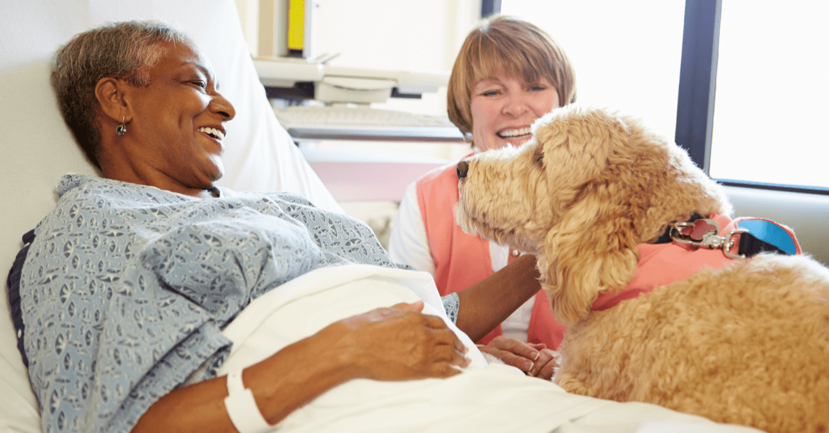 dog therapy in a hospital setting