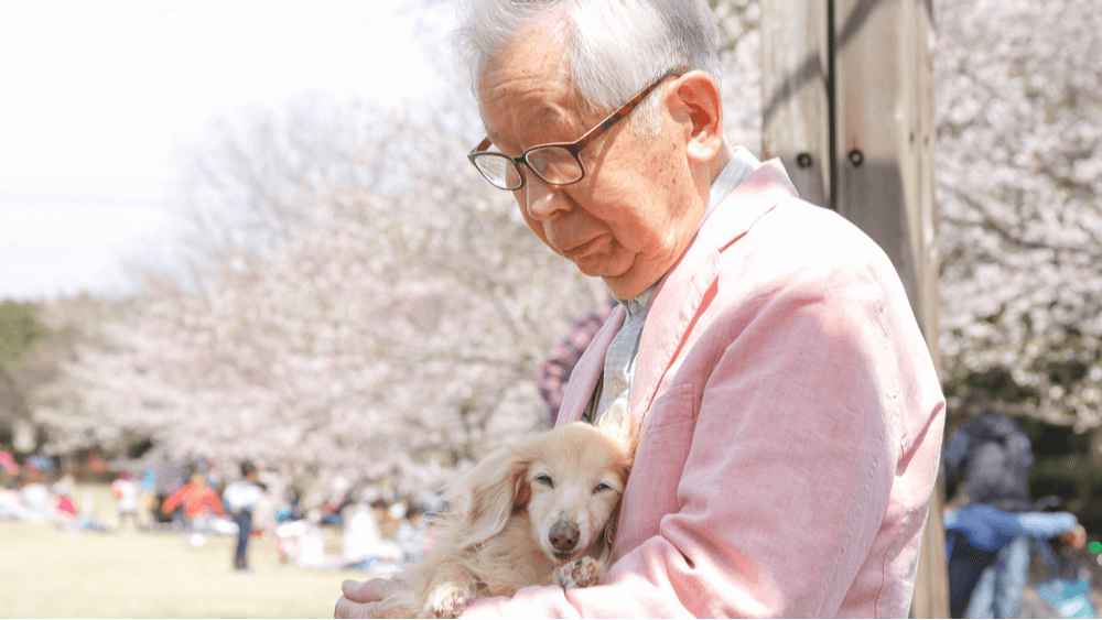 elderly Asian lady holding a pup in her lap sitting on a bench in a park