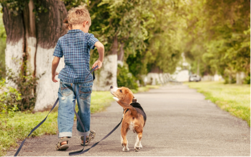 blonde kid walking a Beagle