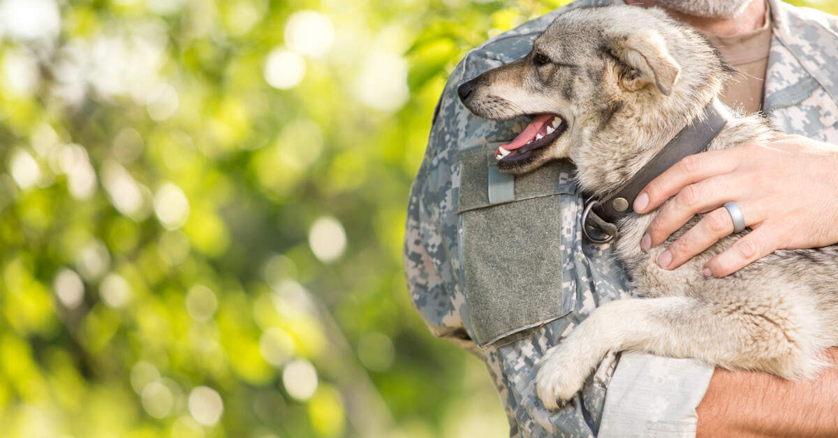 veteran holiding cute puppy
